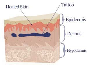 tattoo skin section